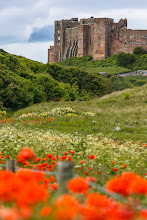 Photo: Bamburgh Castle Wildflowers  These colourful poppies were an unexpected bonus during my trip up to Northumberland in June.I'd liked to have been a few paces back for this shot but that would have been hazardous to my health - there was a busy road with cars wizzing past about 10cm to my left!  #FortressesFriday by +Benjamin Dahlhoff #FloralFriday by +Tamara Pruessner (+FloralFriday)  Tomorrow I head to South Africa for 6 weeks where I'll be doing volunteer work on a game reserve innorthern Zululand. It'll make a pretty big change from life in London that's for sure and of course I'm really looking forward to the adventure!  It sounds like I won't have great Internet access, perhaps just a slow connection once a week, so apologies in advance if I'm a bit quiet over the coming weeks. I'll of course be taking plenty of photos while there and will try to post a few whenever I can.  Take care all!