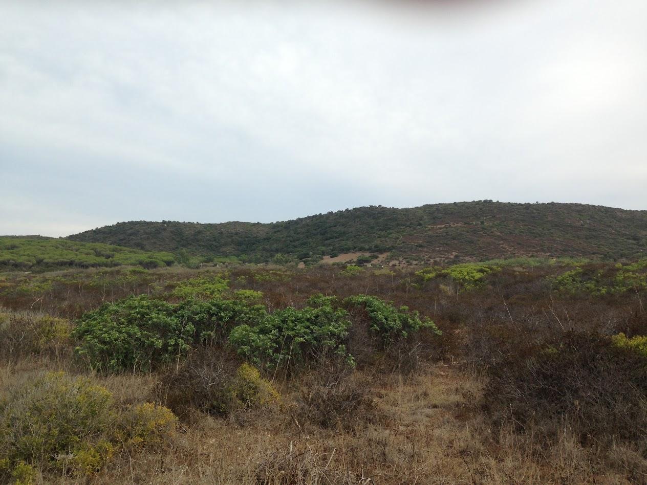 Виды холмы