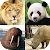 Animals Quiz - Learn All Mammals, Birds and more! file APK for Gaming PC/PS3/PS4 Smart TV