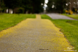 Photo: The Path Left Untraveled