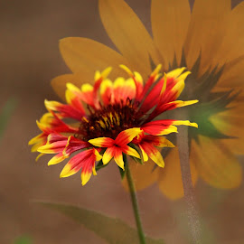 Into the light... by Val Brill - Digital Art Things ( orange, flowers, beach flower, yellow, daisy )