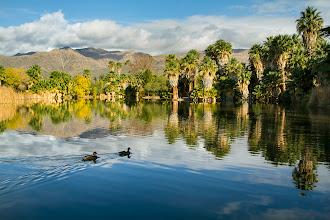 Photo: Agua Caliente Oasis
