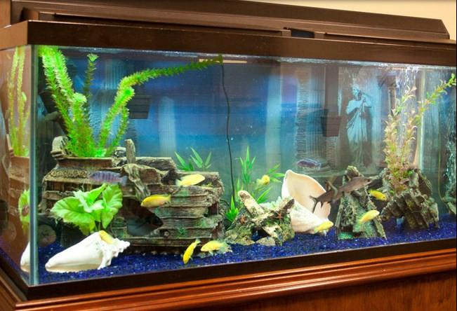 fish aquarium design ideas screenshot