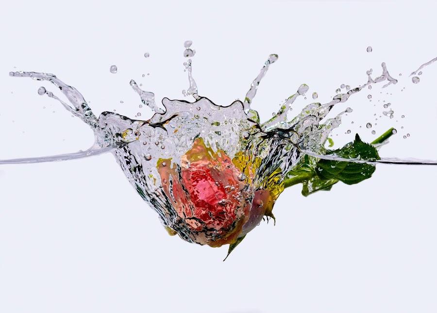 A rose splashes!! by Hilda Palm - Flowers Single Flower