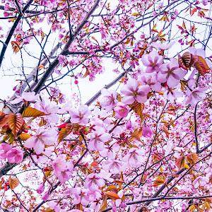 カローラスポーツ NRE214Hのカスタム事例画像 KO_BA@札幌さんの2021年05月05日16:11の投稿