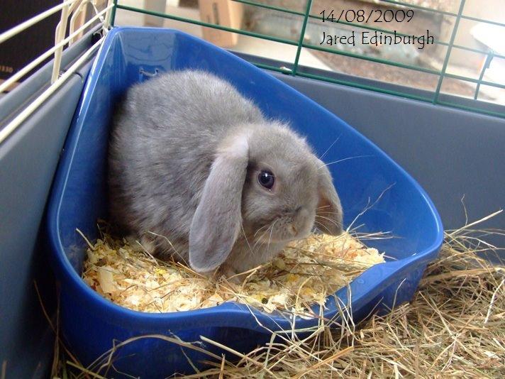 ผลการค้นหารูปภาพสำหรับ กระต่ายขับถ่าย