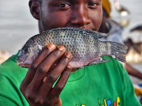 Photo: Tilapia, eine Buntbarschart. Dieser schmackhafte Fisch ist in den letzten Jahren zu einem Exportschlager geworden.