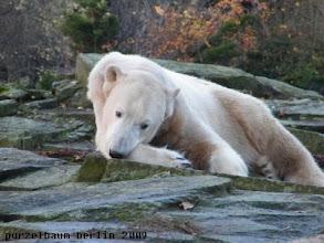 Photo: Knopfaugen-Knut :-)