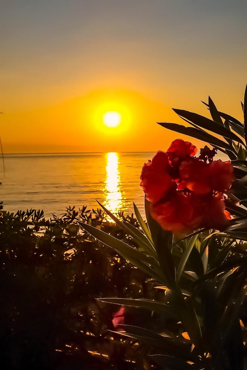 Mare Sole Fiore Primavera di Essential