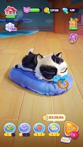 Catapolis: Cat Game | Kitty simulator 4