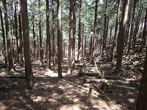 左手に林道が見える