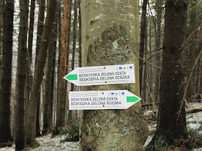 """Photo: 20.Słowacki zielony szlak. Niby jest, a jakby go nie było. Znaki na wielu drzewach """"proszą się"""" o odnowienie. Kłopotów z jego lokalizacją jednak nie ma, bo co kawałek jest słupek graniczny."""