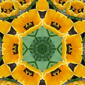 083-Golden Tulips-2.jpg