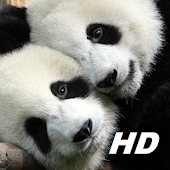 panda wallpapers HD free special for you