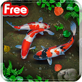 KOI Lucky Fish Live Wallpaper