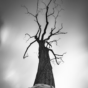 the lonely tree by Alexandru Ciornea - Nature Up Close Trees & Bushes ( lonely )
