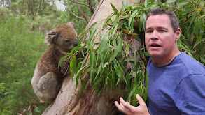Cute Critters of Australia thumbnail