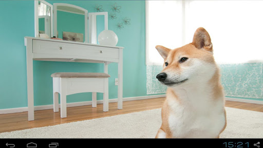 Beautiful Shiba Dog images