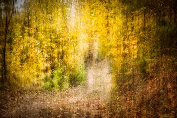 Il bosco e l'autunno di Cristiano Giani