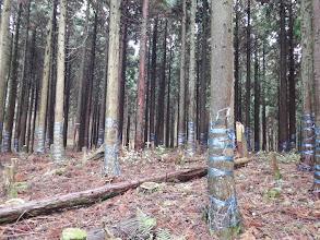 植林帯を登る