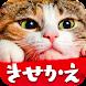 猫の可愛い壁紙 - Androidアプリ