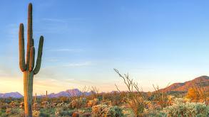 Desert Heartlands thumbnail