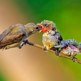 Haaapppp....... happpp by Husada Loy - Animals Birds