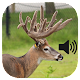 Whitetail Deer Calls Download for PC Windows 10/8/7