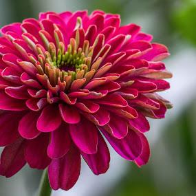 by Nil Jay - Flowers Single Flower (  )