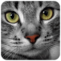 Cats Sounds icon
