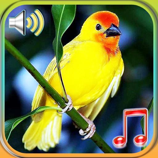 Birds Sounds Ringtones & Wallpapers