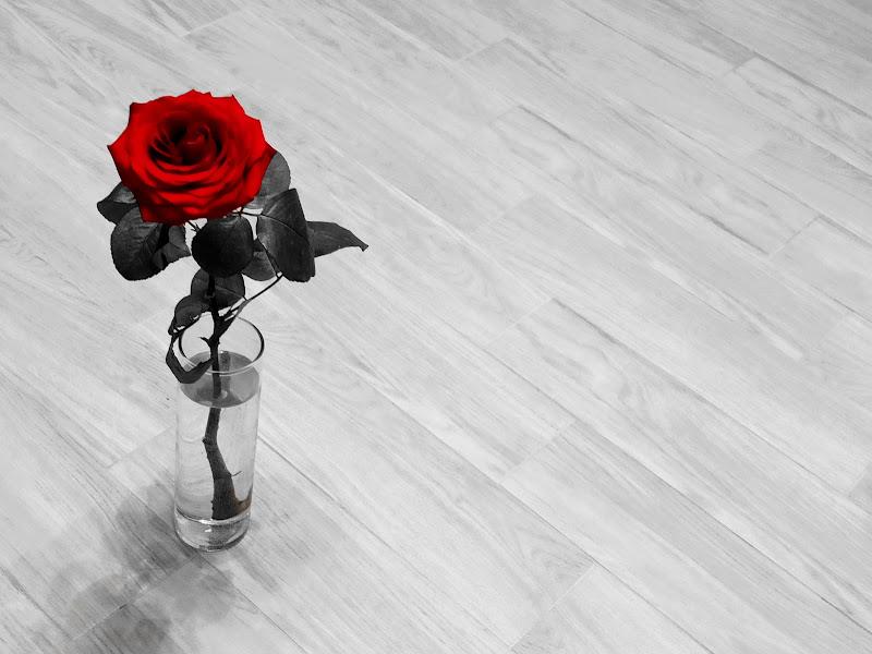 La rosa rossa di Luca Mandelli