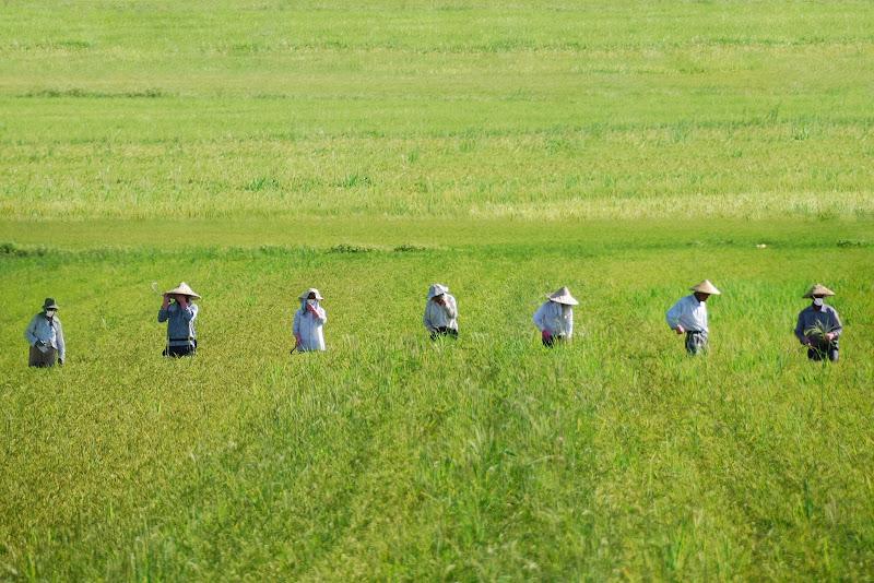 4 Maggio: Agricoltura 4.0 di giacominet
