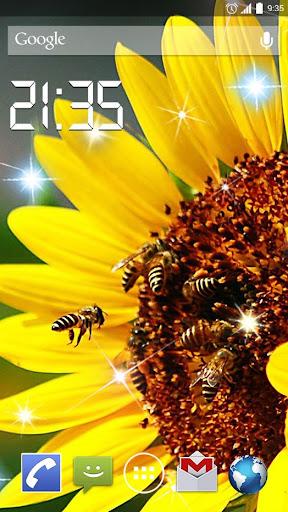 Sunflower Field 4K Live