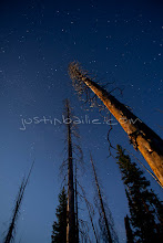 Photo: Trees lit at night by moonlight. Yellowstone National Park