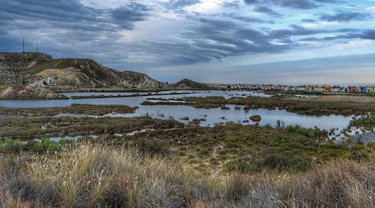 Medioambiente rechaza proteger los espacios aledaños al Salar de los Canos