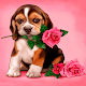 Puppy Rose Live Wallpaper Download for PC Windows 10/8/7