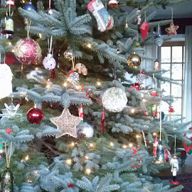 Decorated tree by Karen McGregor - Public Holidays Christmas