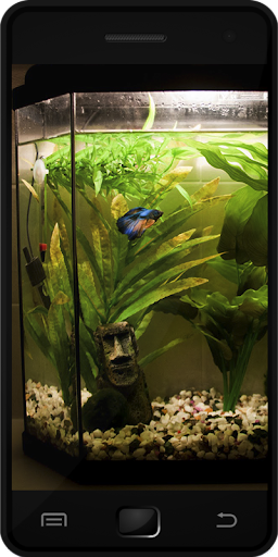 Download fish tank for pc for Fish tank app