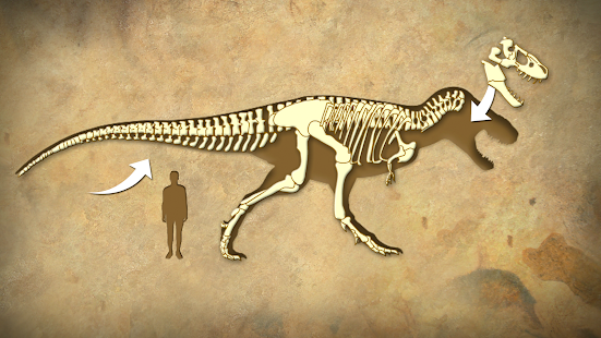 Dinosaurs Fossils For Kids