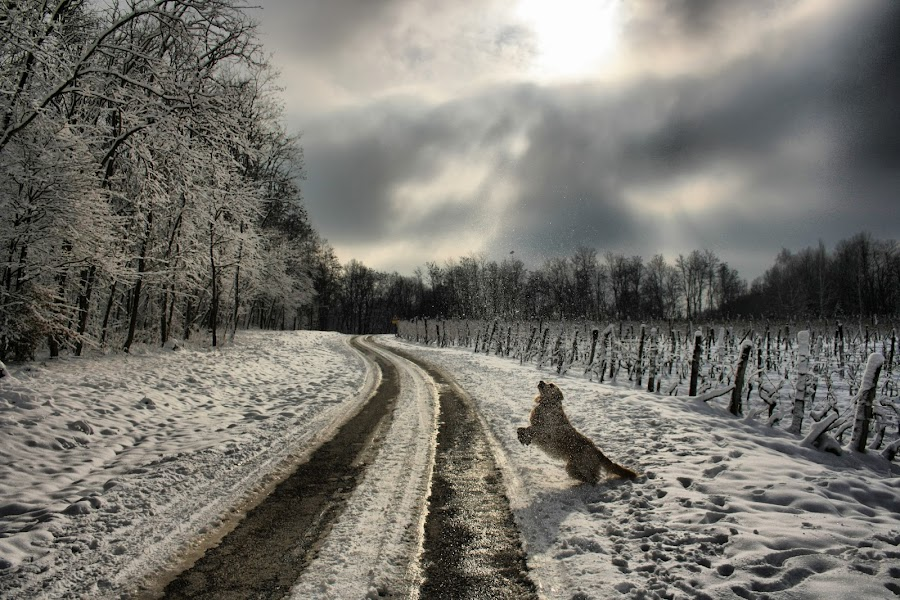 by Jitka Pleša - Landscapes Weather
