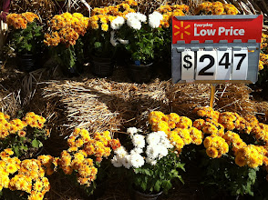 Photo: I thought these were really good prices for plants, but I remembered my goal to avoid impulse buys and resisted the urge to put a few in my cart. I have some nice mums at home.