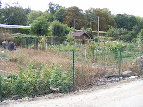 """Photo: The riverside path includes quite a number of garden plots, presumably owned or leased by town residents. I'm betting that these are more than simple vegetable gardens, but also serve as simple """"pied á terre"""" second homes, with their small sheds doubling as cottages for relaxation. A few plots contain obvious signs of such extended usage, such as children's swing sets."""