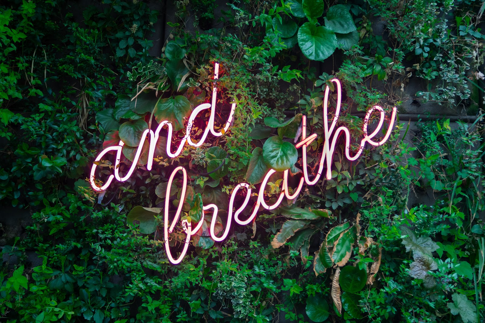 "Neon sign hung amongst trees that says, ""and breathe."""