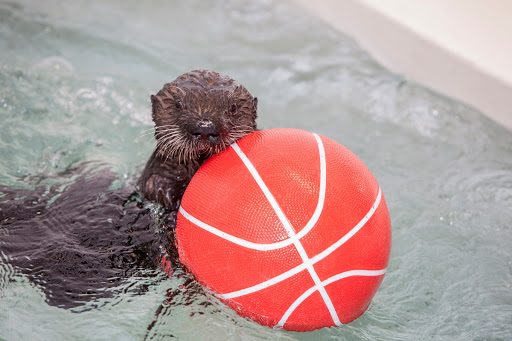 Luna Sea Otter Enrichment