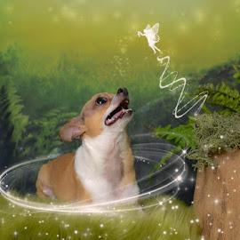 Doggy Magic by Chris Cavallo - Digital Art Animals ( magic, dog, fairy, dog portrait )