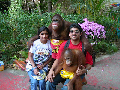 safari world thailand orangutan