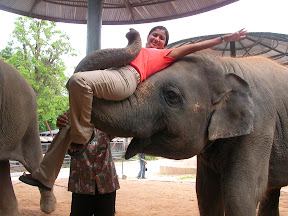 crocodile park pattaya thailand elephant