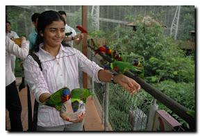 lory loft jurong bird park Singapore