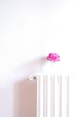 Un po' di rosa a scaldare l'ambiente di -Os-